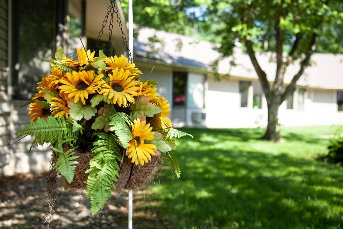 Rose Garden hanging flower basket sunflowers